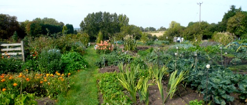 Flowers and vegetables growing on allotments